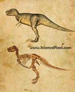 Dinosaurier Tyrannosaurus rex / dinosaur Tyrannosaurus rex